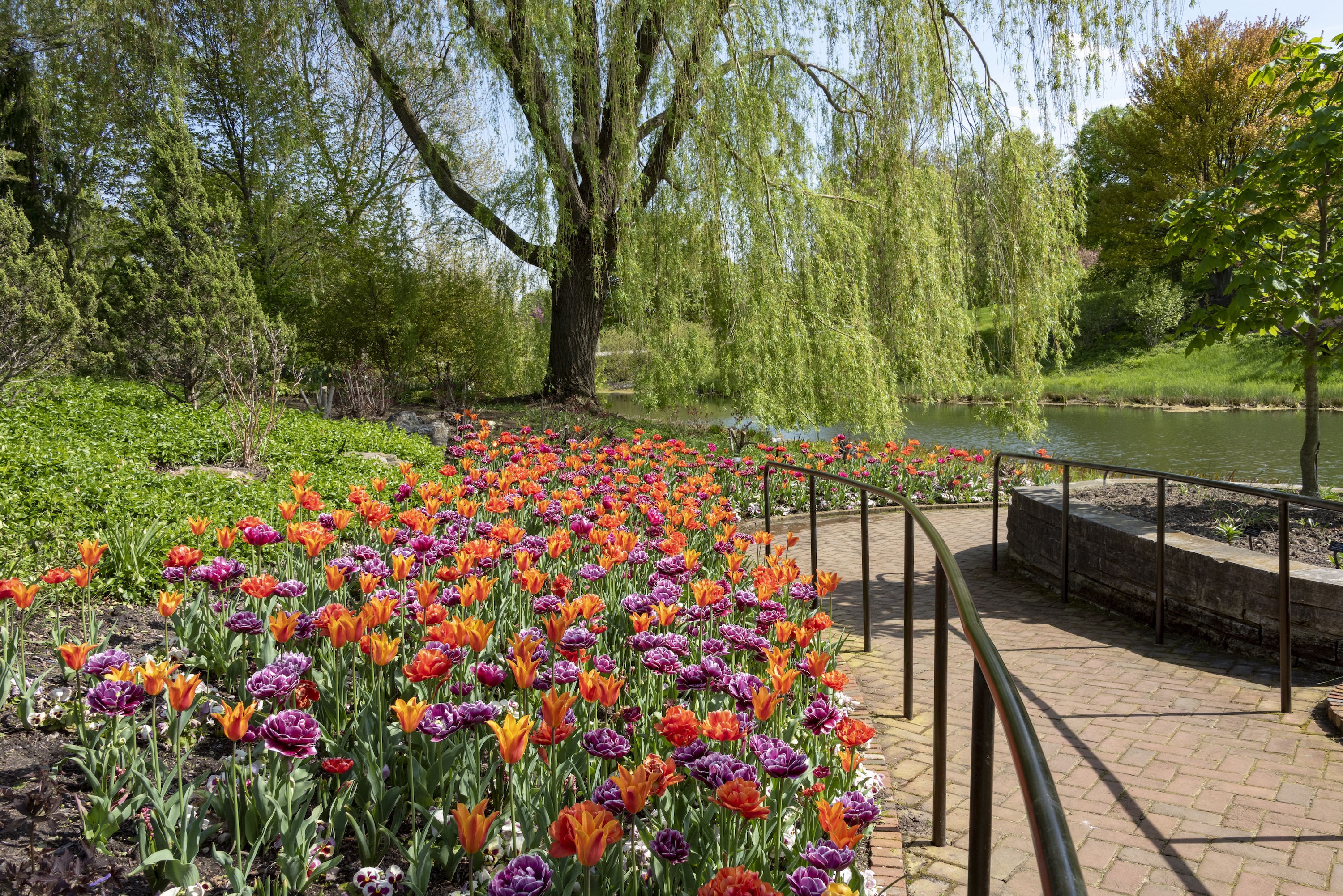 The Chicago Botanic Garden will welcome visitors again, beginning on June 9