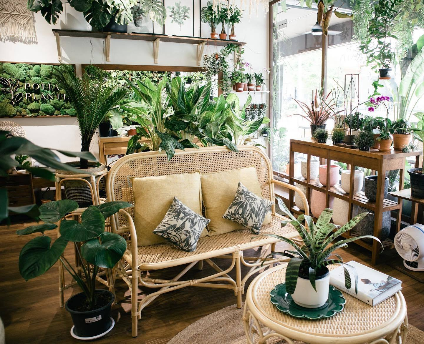 7 Best Online Plant Delivery Shops In Singapore