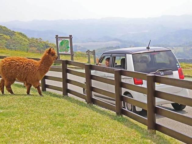 マザー牧場 ドライブスルーファーム