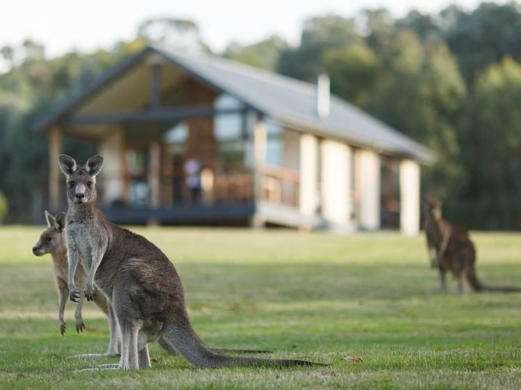 Weekend getaways: Yarra Valley
