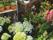 Mercado de las flores callejero edición primavera