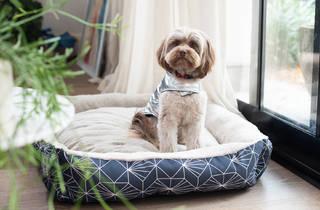 PETstock dog on bed