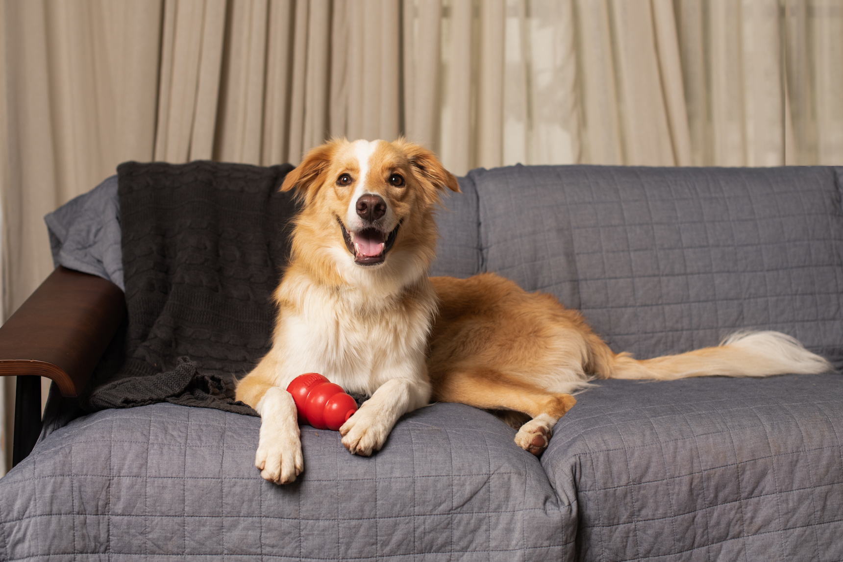 dog on couch with kong