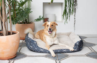 PETstock dog on bed with plants