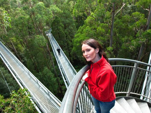 Otway Fly Treetop Adventures (Photograph: Supplied/Otway Fly )