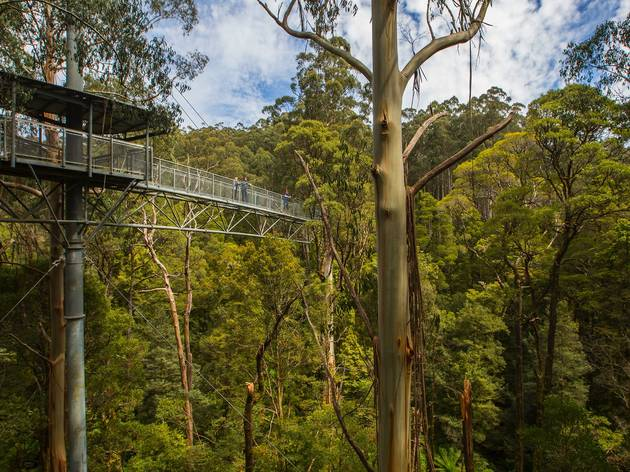 Otway Fly Treetop Adventures (Photograph: Supplied/Otway Fly)