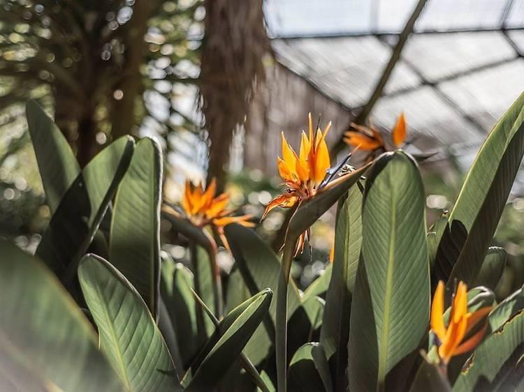 9. Descobrir a botânica