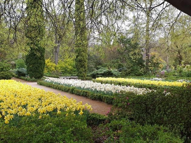 Parterres del Real Jardín Botánico