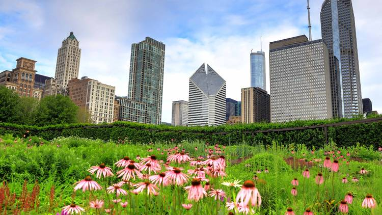 lurie garden, lurie gardens, millennium park, skyline, park, outdoors, nature, downtown, chicago