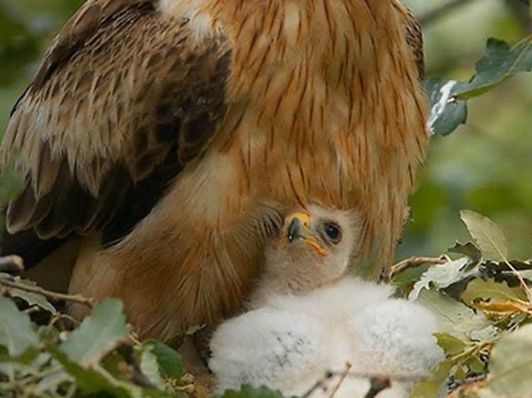 Asomarte al nido de un águila