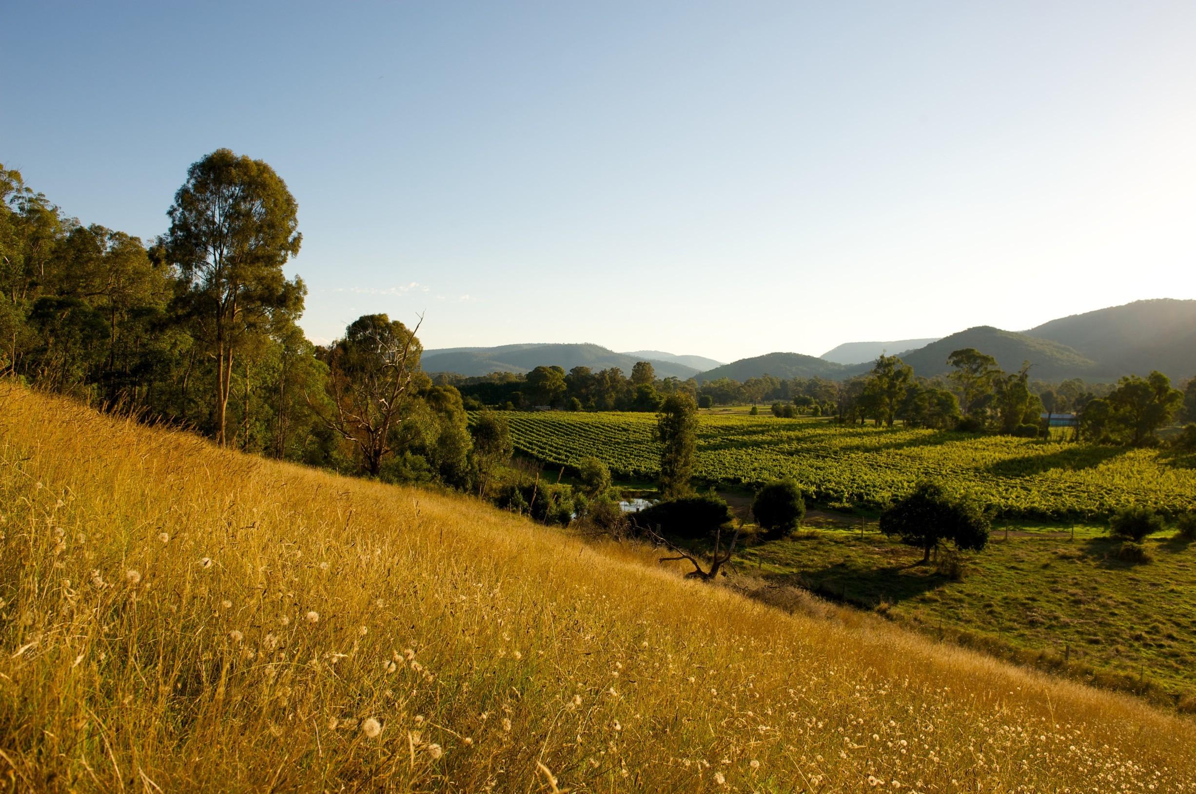 King Valley vista