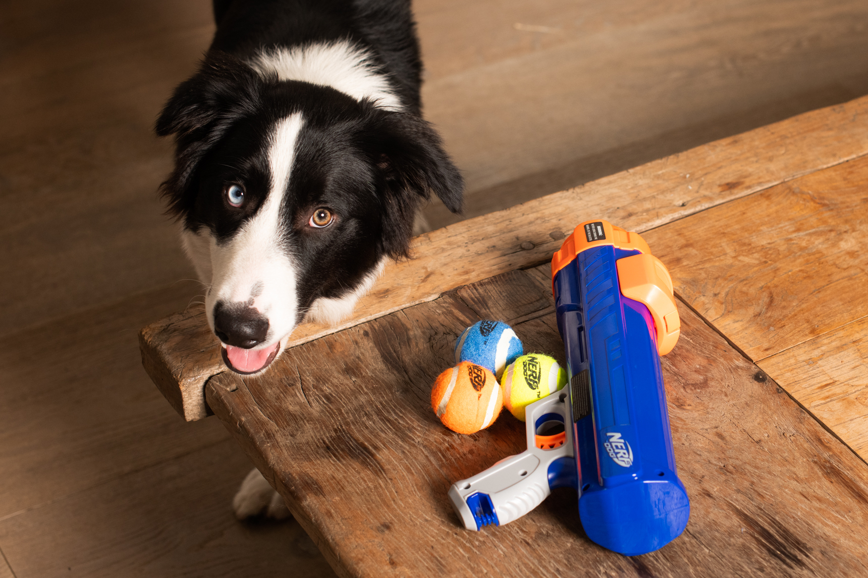Dog playing with toy from Petstock