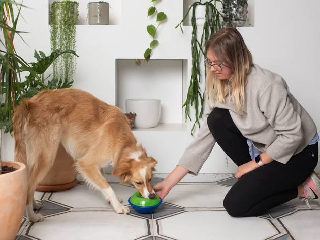 Dog eating Petstock