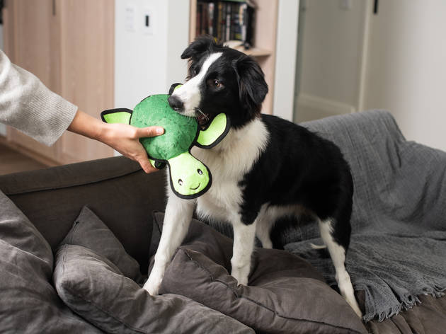 Five dog toys and treats for your best friend