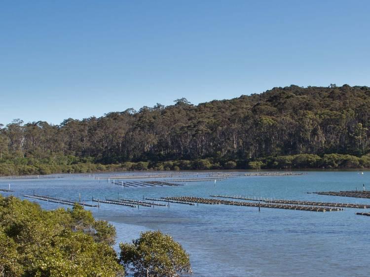 Slurp oysters on the South Coast
