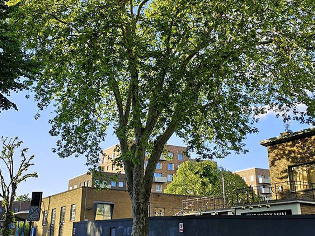 Petition to save The Happy Man Tree in Homerton, Hackney