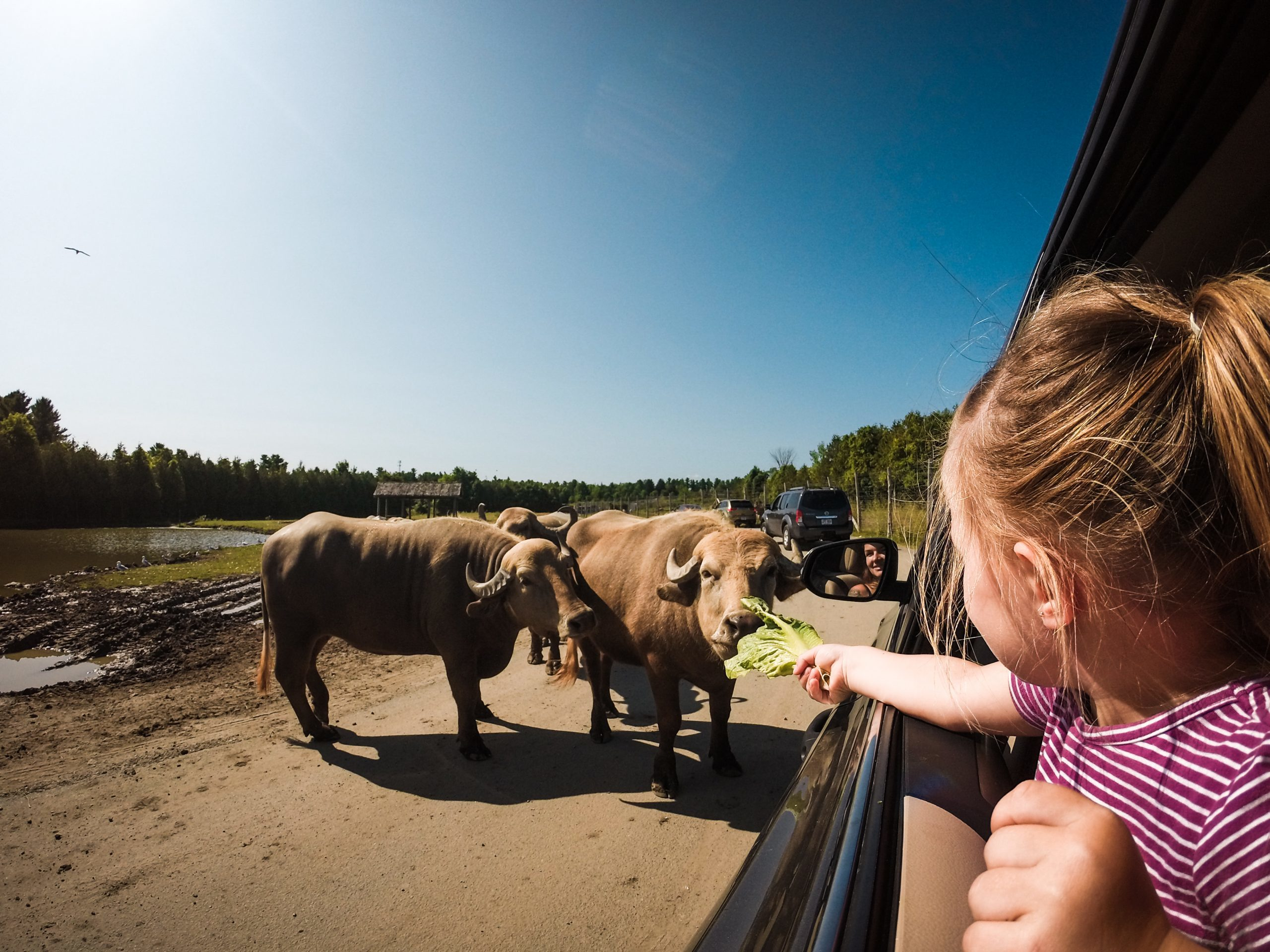 The best Montreal zoos to go wild over