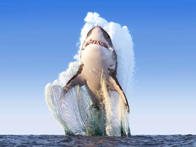 Ladies and gentlemen, here is the full Shark Week schedule
