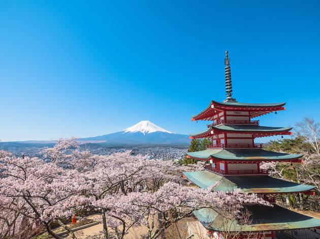 Mt Fuji, Chureito Pagoda, cherry blossoms