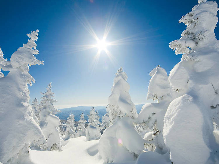 蔵王の樹氷(山形県)