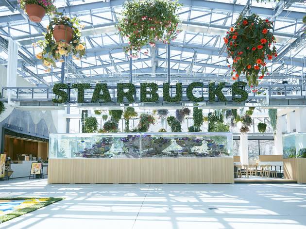 Hana Biyori Starbucks