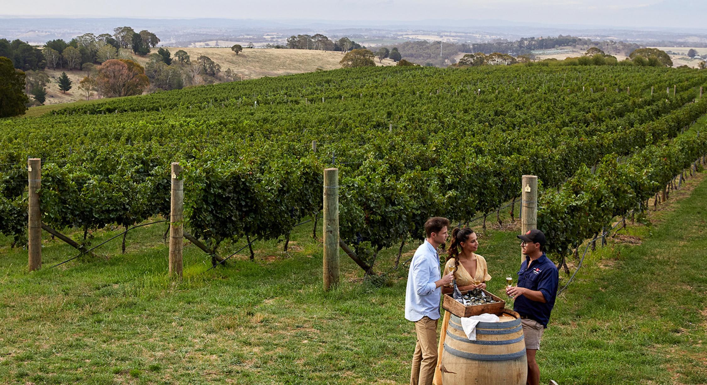 Vineyards in Orange