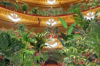 Liceu opera house, concert for plants