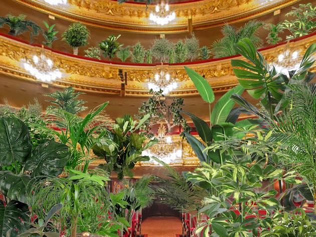 バルセロナのオペラ劇場が約2000本の植物を観客にコンサートを開催