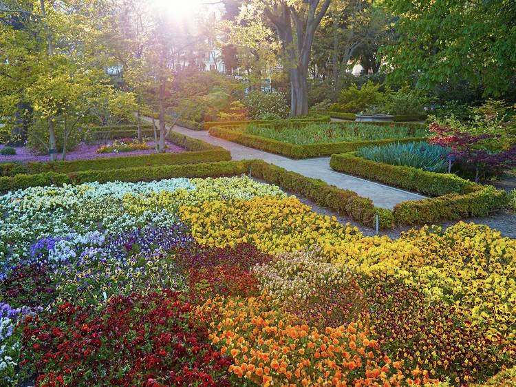 Paseos Musicales del Botánico, pura belleza