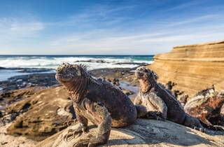 Iguanas on the Galapagos