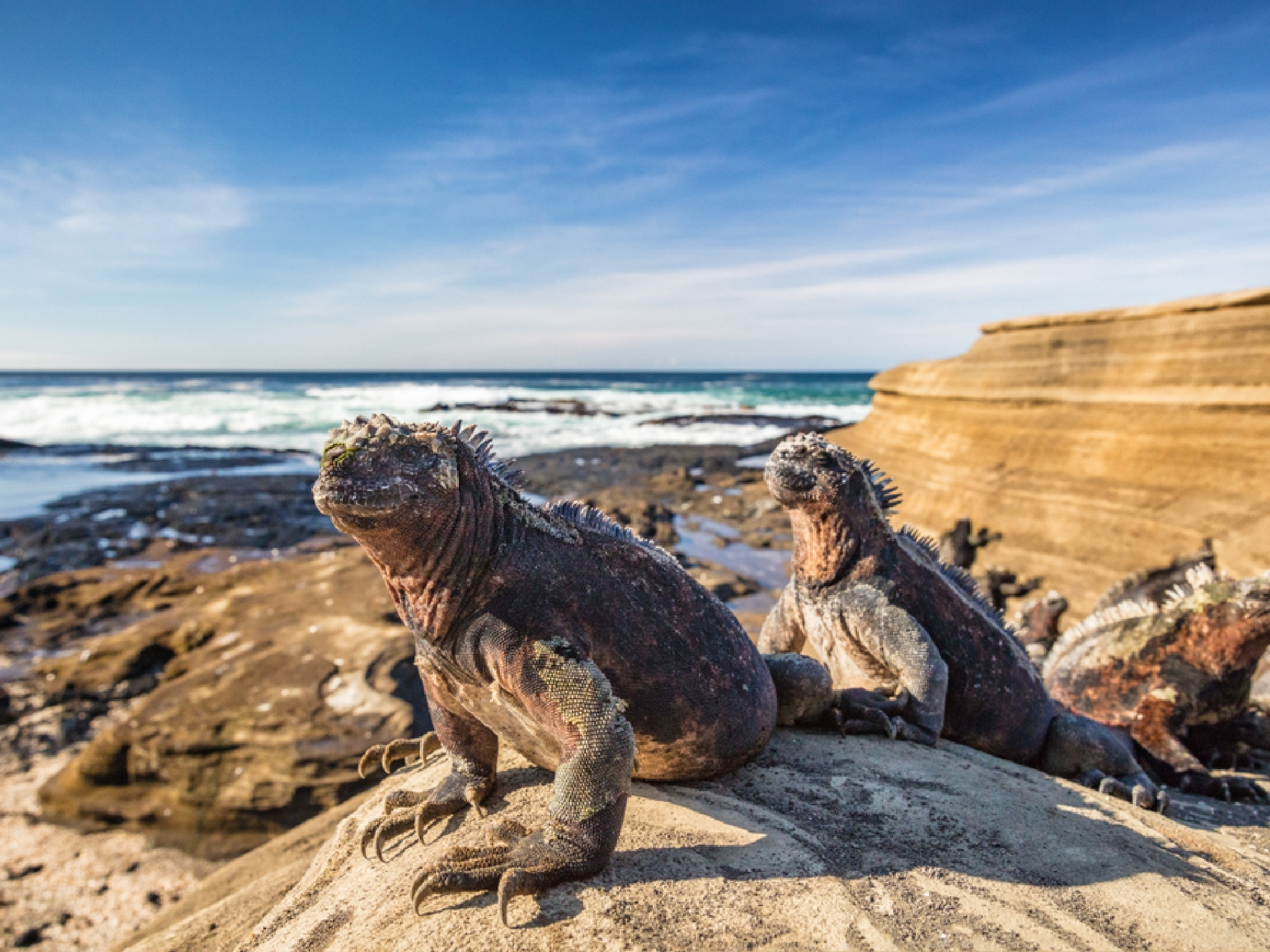 Wildlife is reclaiming the Galápagos Islands