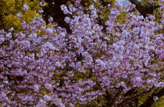 Late Spring, ArtScience on Screen