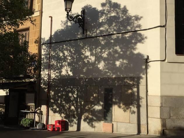 'To talk about trees', de Sara Agudo Millan