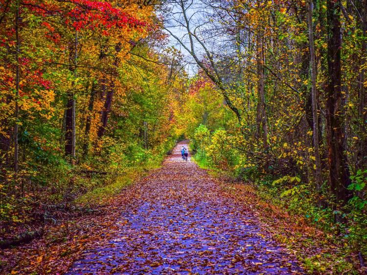 South Carolina: Cruise the Greenville Health System Swamp Rabbit Trail