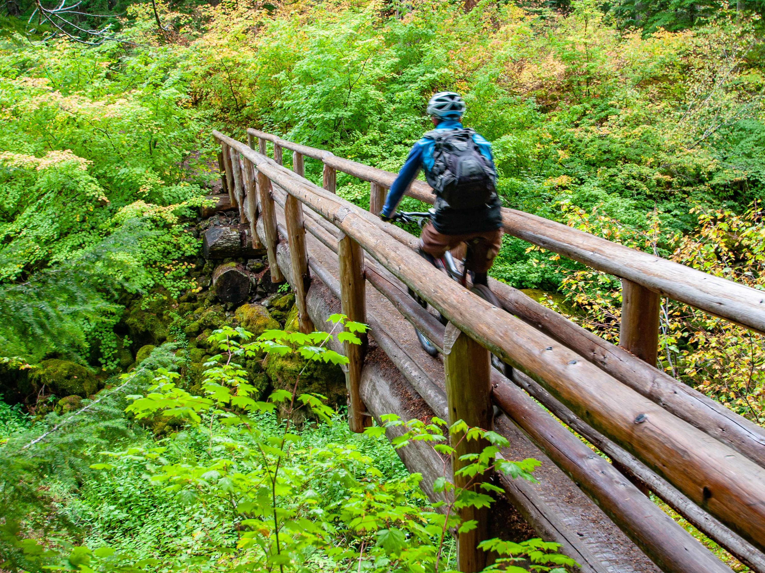 McKenzie River Trail