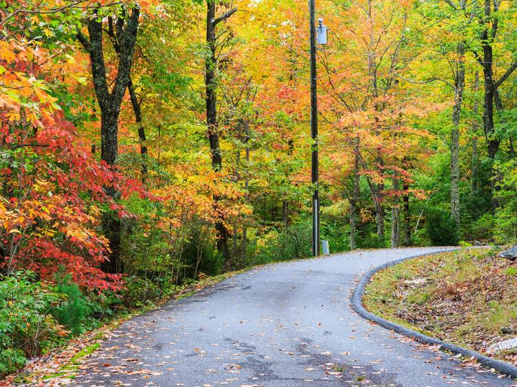 Laurel Mountain Ride   Brevard, NC