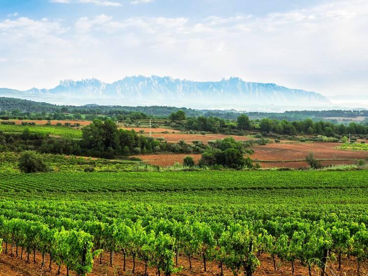 Enoturisme i cultura del vi