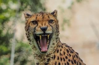 zoo de lisboa