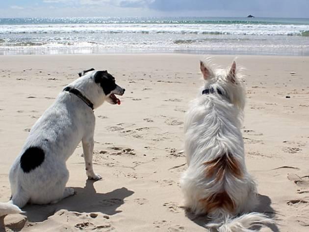 cães <3