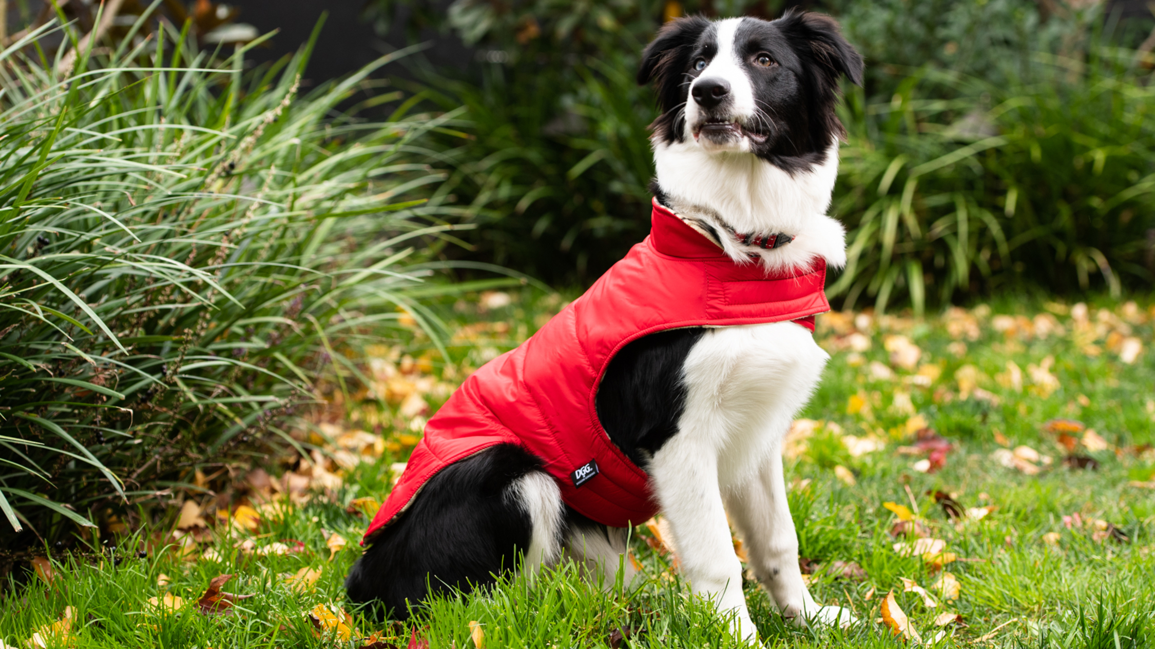 Top winter looks for your four-legged friend