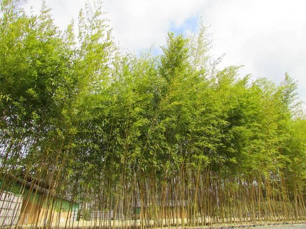 Sasa Rikyu - Tateshina Bamboograss Garden