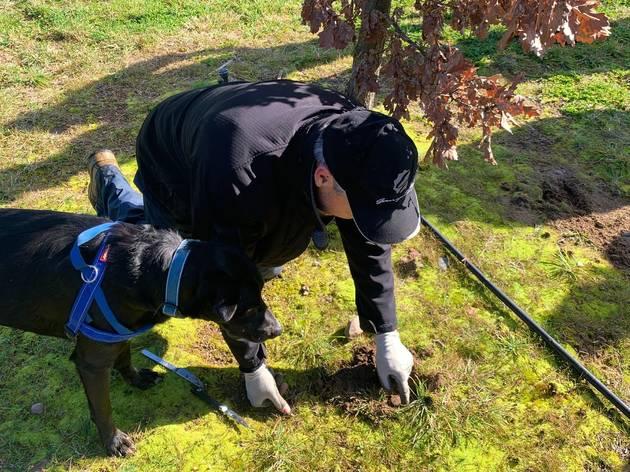 Zazu and David, truffle hunt