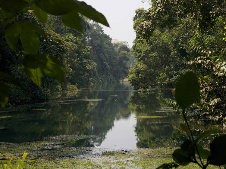The most beautiful public parks in Singapore