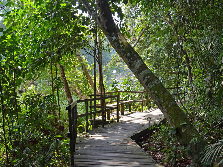 The best hiking trails and spots in Singapore