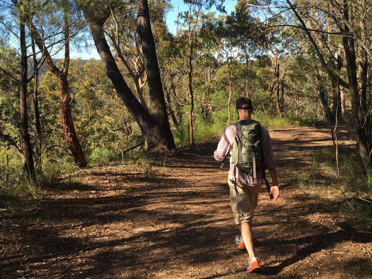 Perimetre Trail to Wilkins Lookout