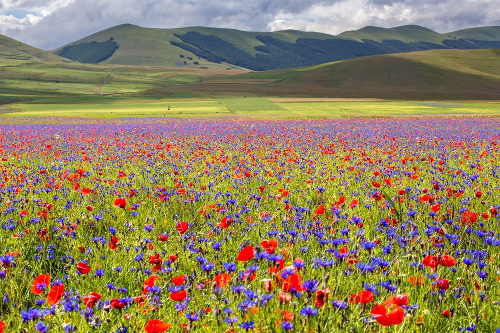This Italian village is entirely surrounded by wildflowers
