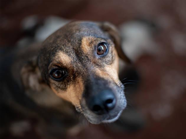 Adopta un perrito a través de la SSC y el Metro de la CDMX
