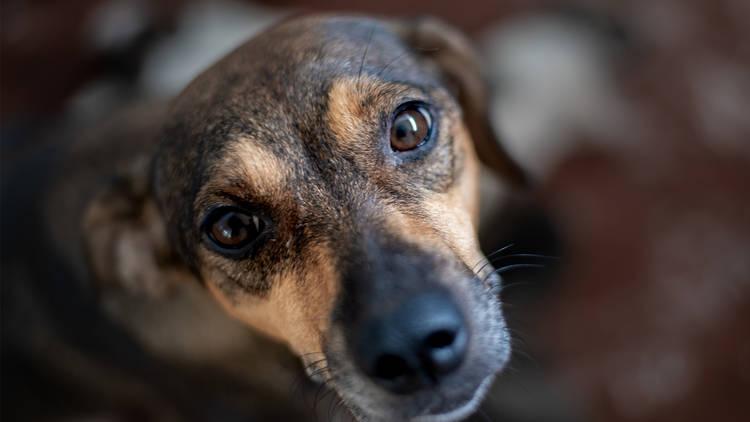 Rostro de perro mirando hacia arriba