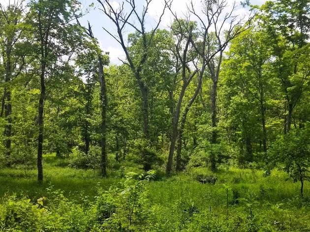 Deer Grove Forest Preserve