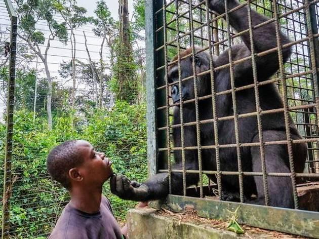 monkey touching man